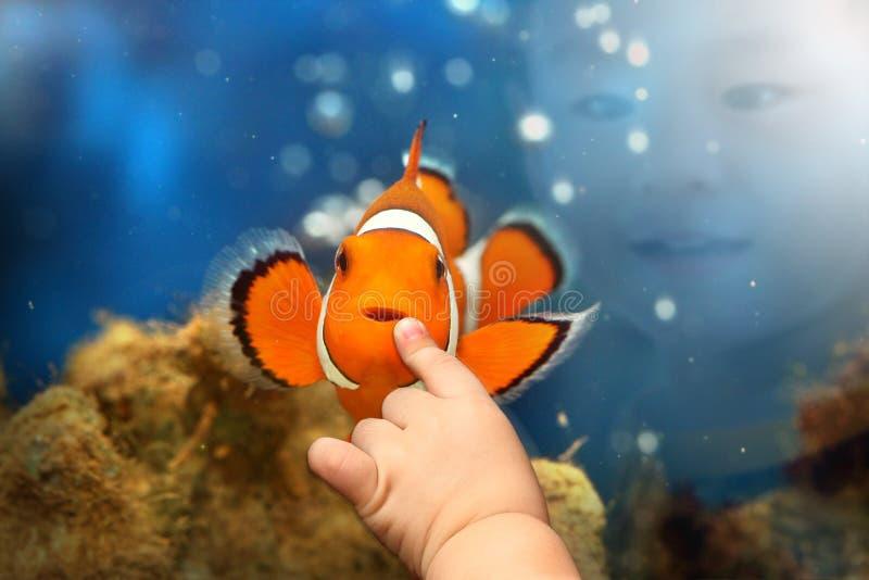 Menino que joga com os peixes do palhaço de Nemo fotografia de stock