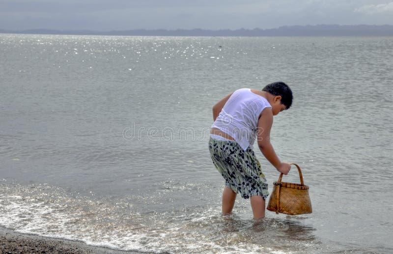 Menino que Picking-up escudos em uma praia foto de stock