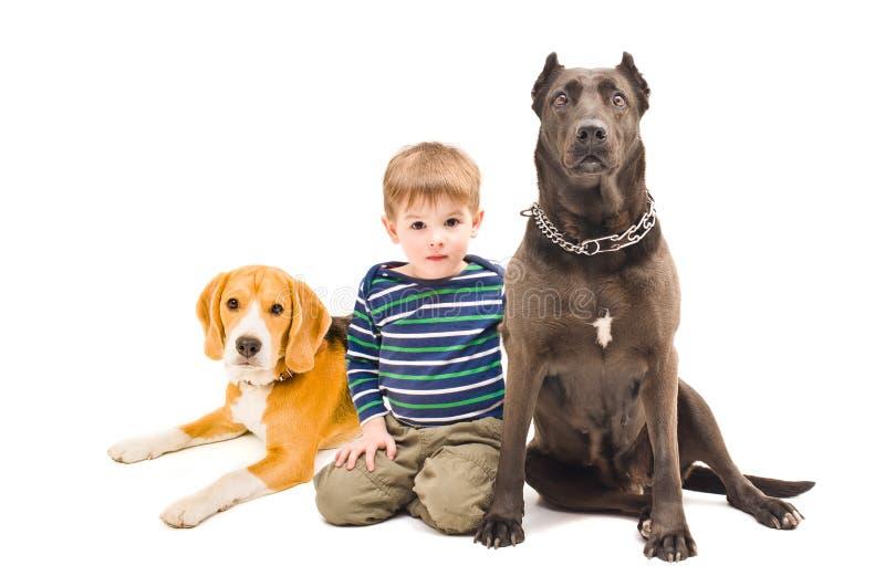 Menino que senta-se com dois cães foto de stock