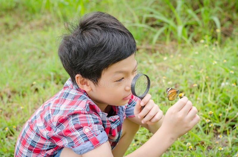 Menino que usa a lupa a observar a borboleta imagens de stock royalty free