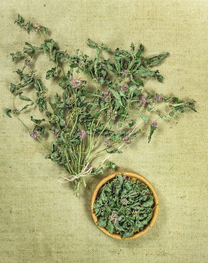Mennica, spearmint, miętówka suszone zioła Ziołowa medycyna, phyto zdjęcie royalty free