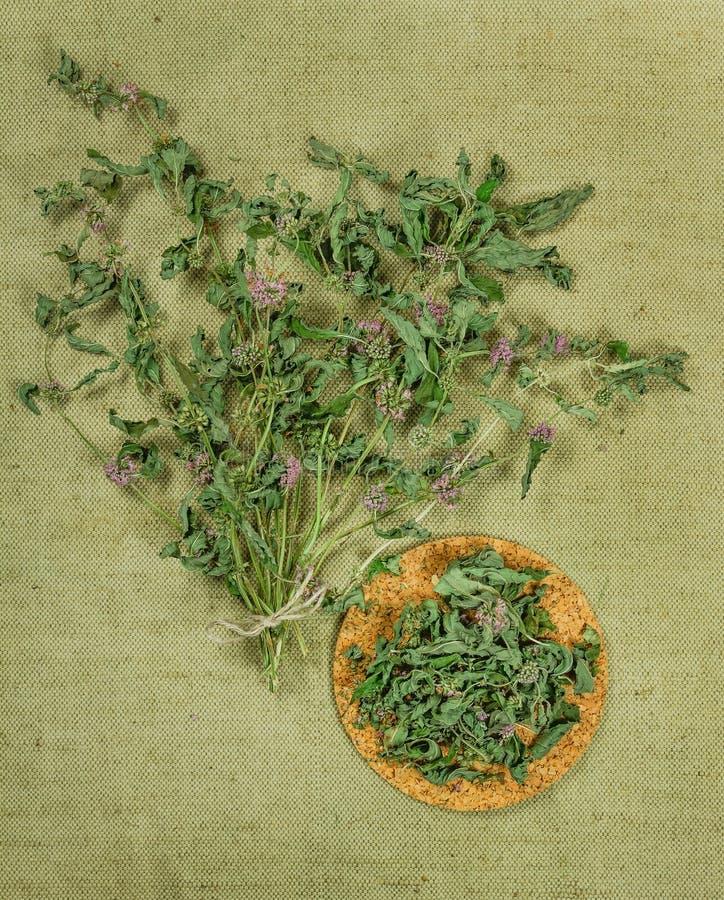 Mennica, spearmint, miętówka suszone zioła Ziołowa medycyna, phytot zdjęcie stock