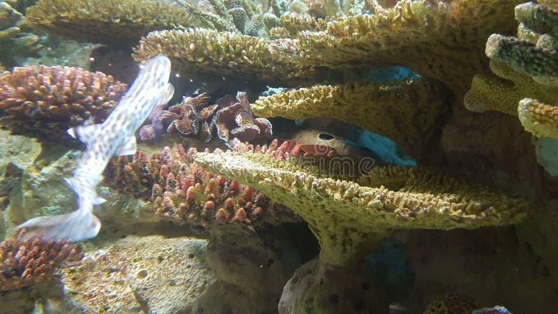 meno de lombok d'île de l'Indonésie de gili près de monde sous-marin de tortue de mer image libre de droits