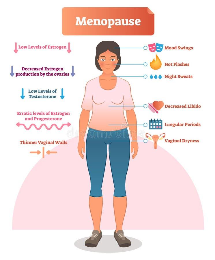 Menopause labeled vector illustration. Medical scheme with list of estrogen, ovaries, testosterone and progesterone symptoms. Menopause labeled vector stock illustration