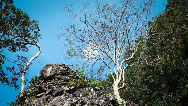 Menos árvore da folha e árvore verde da folha na montanha da rocha contra com o céu azul Conceito da natureza, o diferente e da m fotografia de stock royalty free
