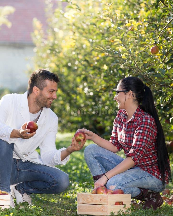 Mens die appel geeft aan meisje in boomgaard royalty-vrije stock afbeeldingen