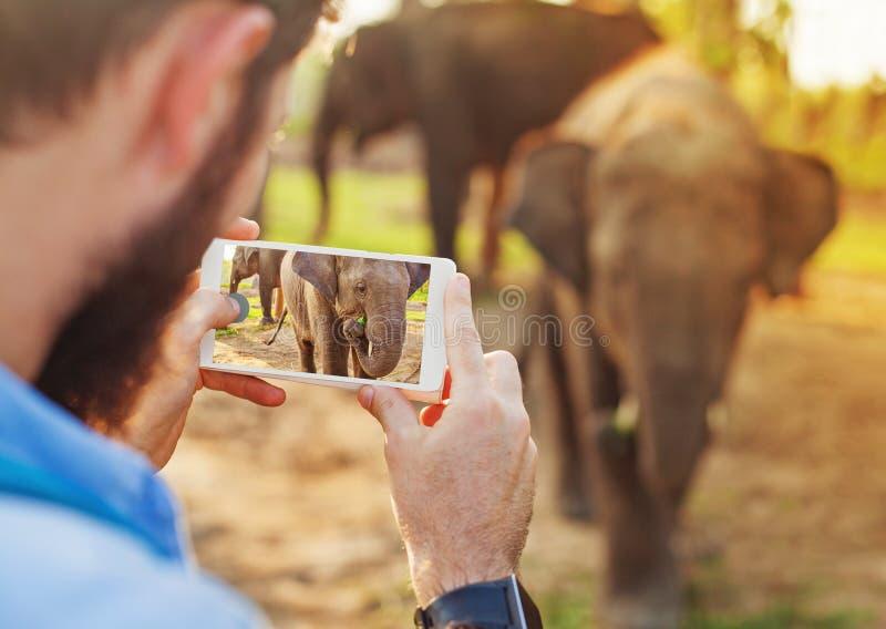 Mens die babyolifant met zijn mobiele telefooncamera fotograferen stock foto
