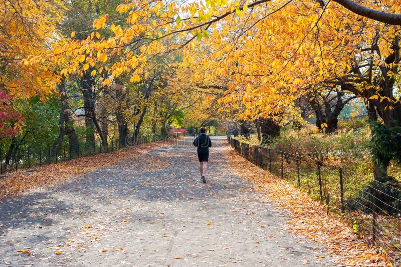 Mens die in Central Park in de herfst lopen stock foto's