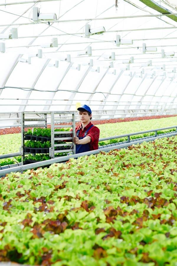 Mens die in de landbouwindustrie werken royalty-vrije stock foto's
