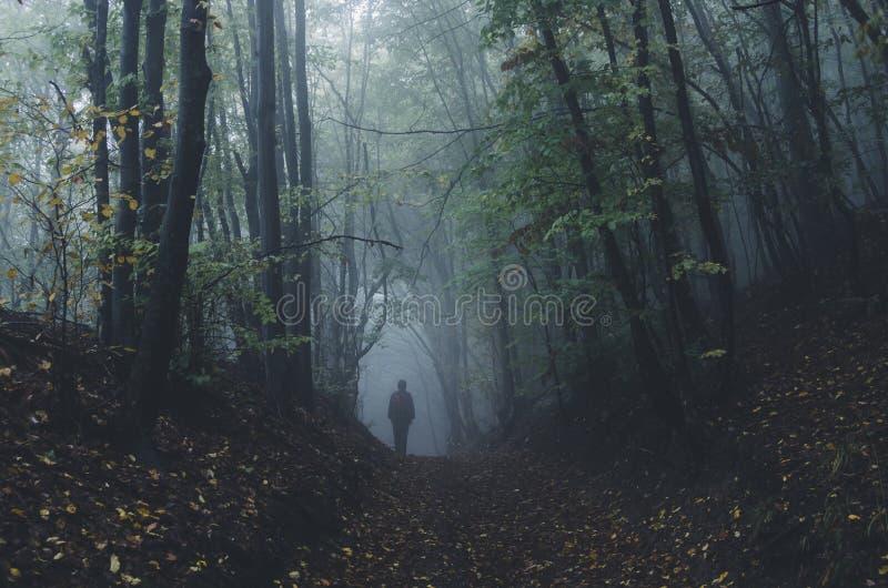 Mens die in donker geheimzinnig bos met mist na regen lopen stock foto's