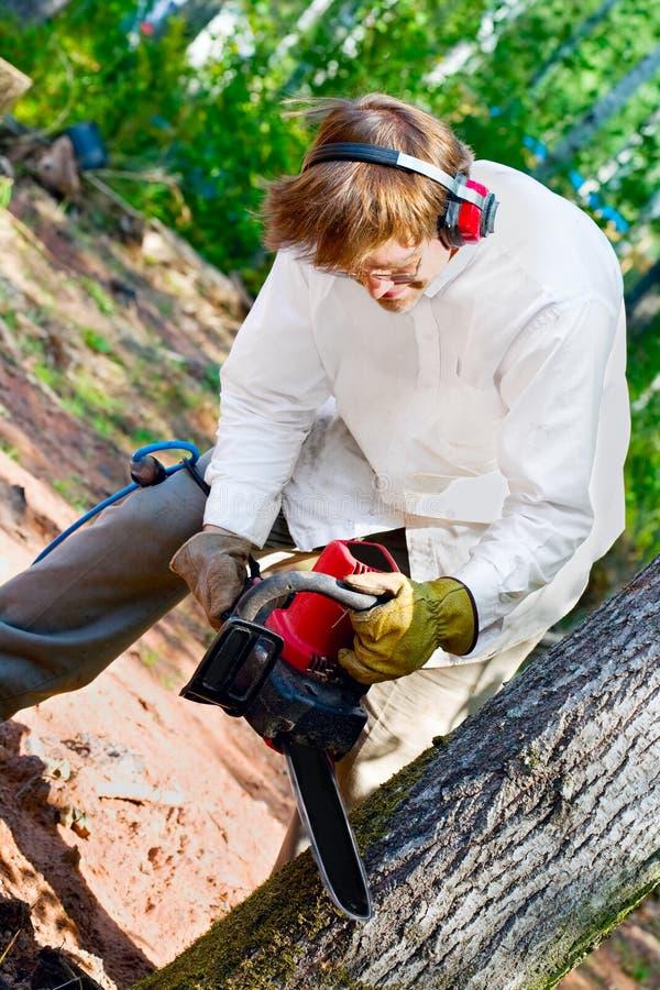 Mens die een boom met een kettingzaag verminderen stock foto