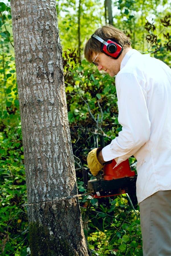 Mens die een boom met een kettingzaag verminderen royalty-vrije stock afbeeldingen