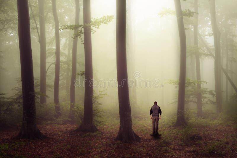 Mens die in eng bos met mist lopen royalty-vrije stock afbeeldingen