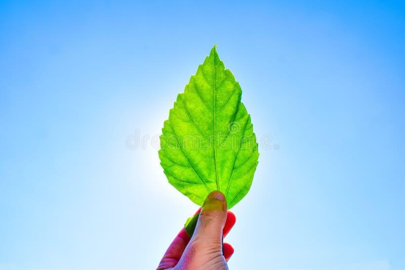 Mens die groen blad houden tegen aan zon en blauwe hemel royalty-vrije stock fotografie