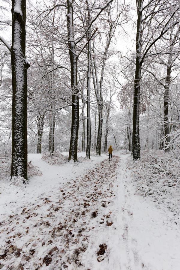 Mens die in het bos in de wintertijd lopen die, met sneeuw wordt behandeld royalty-vrije stock fotografie
