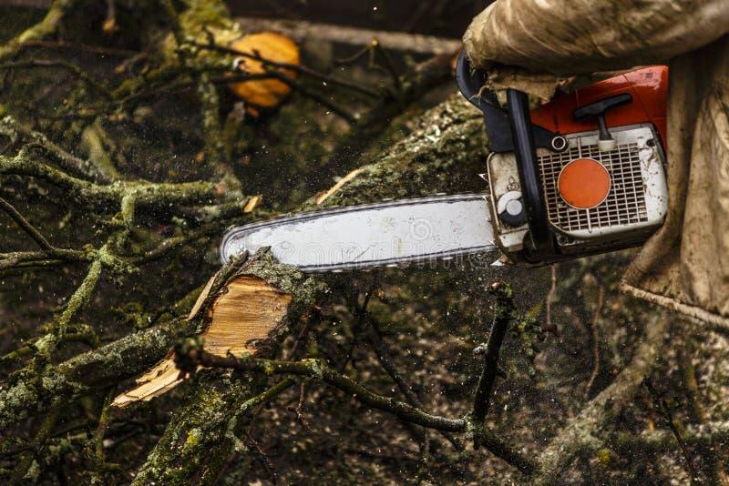 Download Mens Die Login Zagen Zijn Achtertuin Stock Foto - Afbeelding bestaande uit sinaasappel, activiteit: 39111084