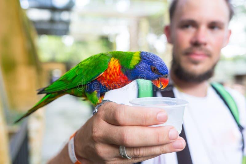 Mens die met papegaaien op de schouder en het hoofd zitten royalty-vrije stock afbeeldingen