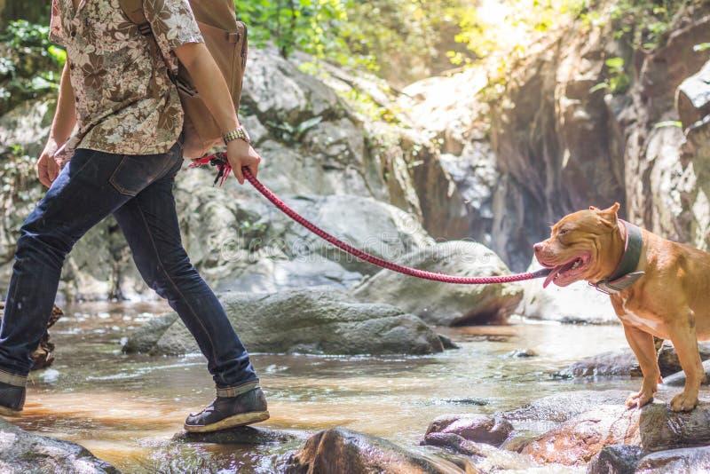 Mens die met Pit Bull-hond dichtbij waterval lopen royalty-vrije stock afbeelding