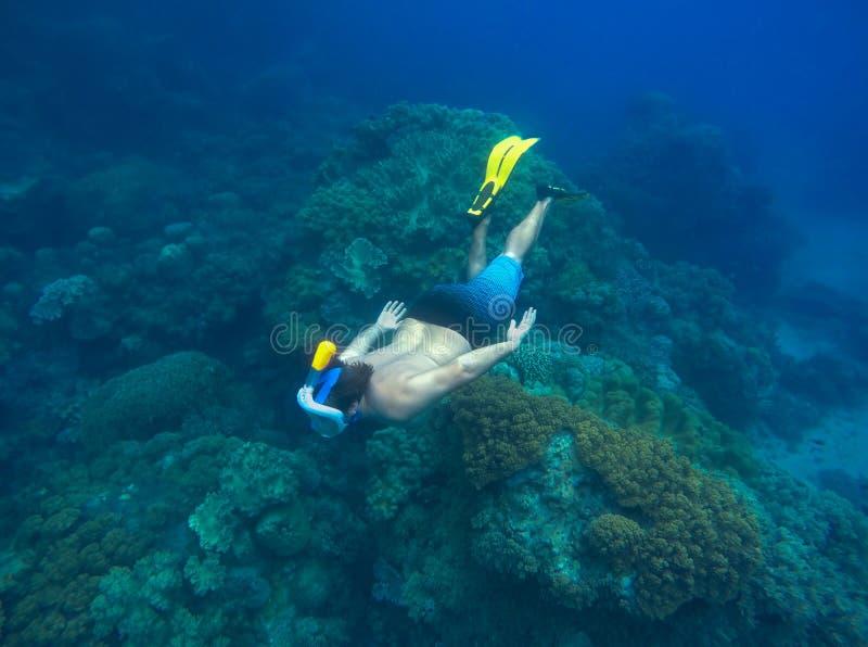 Mens die in overzees snorkelt Het mannetje snorkelt duikvluchten aan overzeese bodem met mariene dieren en planten stock afbeelding