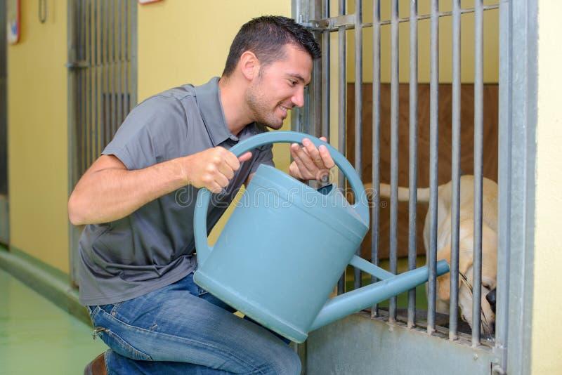 Mens die water geven aan hond stock foto