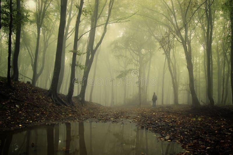 Mens die zich in een groen bos met mist en bomen bevindt stock fotografie
