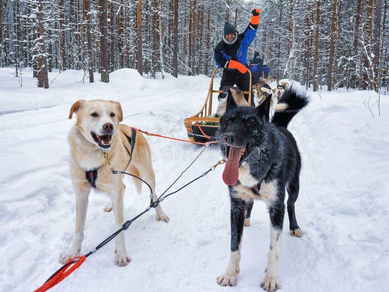 Mens die zich op schor slee in Lapland Finland bevinden royalty-vrije stock afbeelding