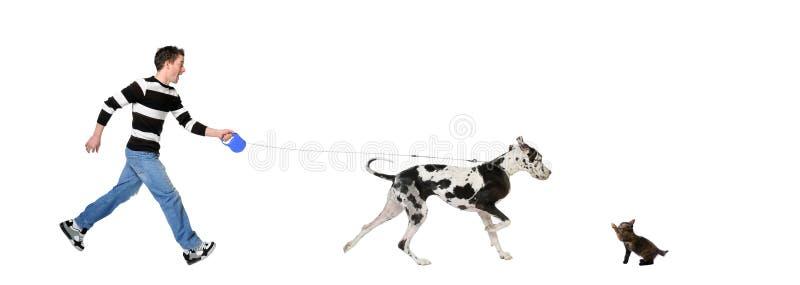 Mens die zijn hond (Grote Deen 4 jaar) loopt royalty-vrije stock afbeeldingen
