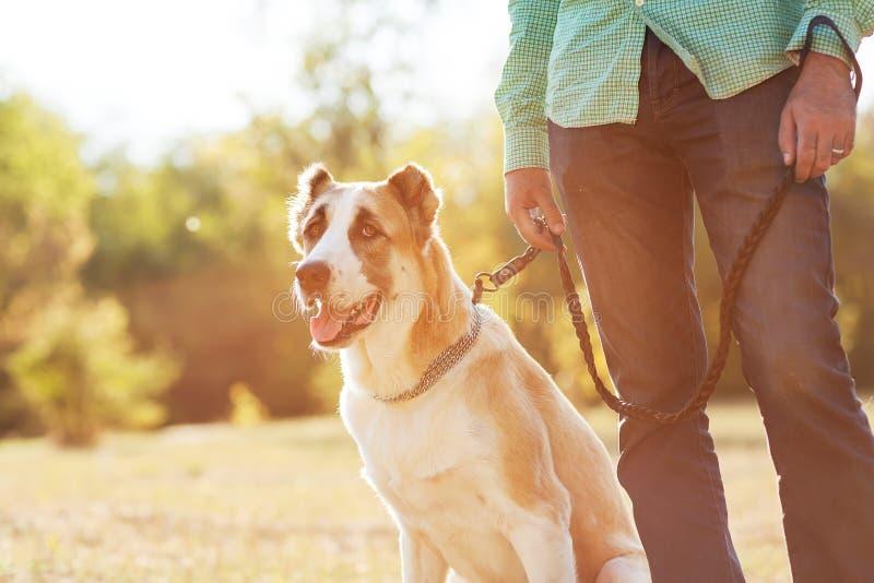 Mens en hond stock afbeeldingen