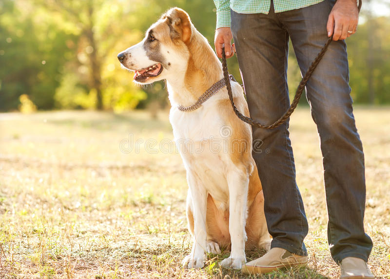 Mens en hond in park stock afbeeldingen