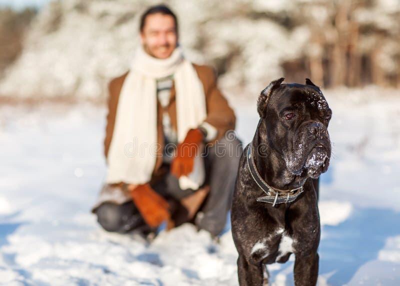 Mens en hondspel in het hout royalty-vrije stock afbeelding