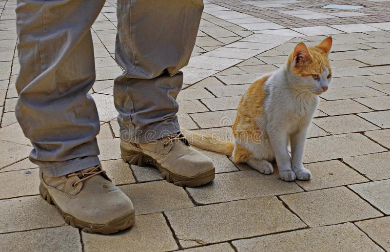 Mens en kattenvriendschap royalty-vrije stock fotografie