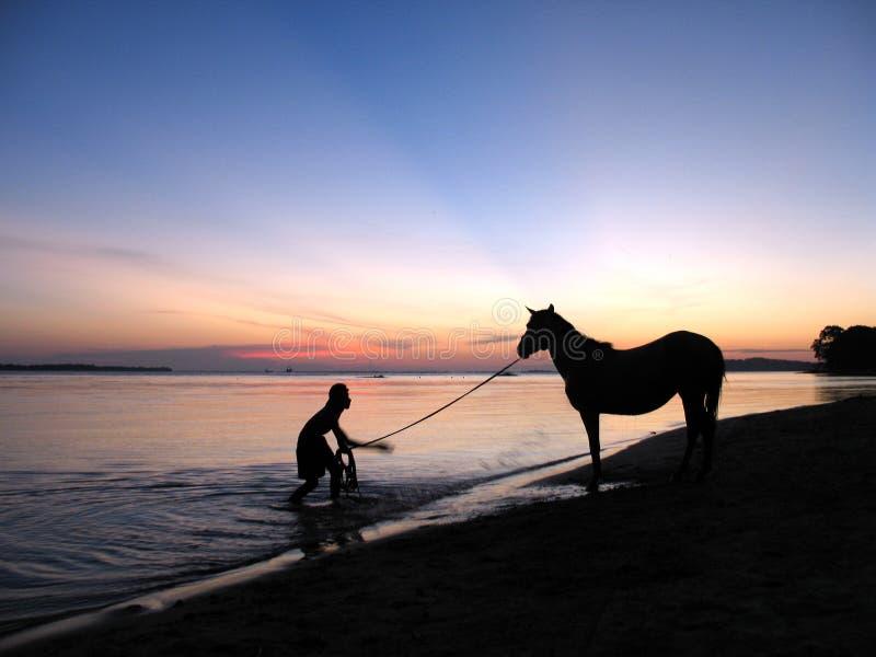 Mens en paard stock fotografie