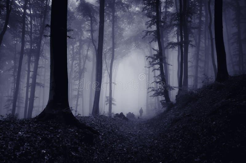 Mens in griezelig donker bos met mist royalty-vrije stock foto