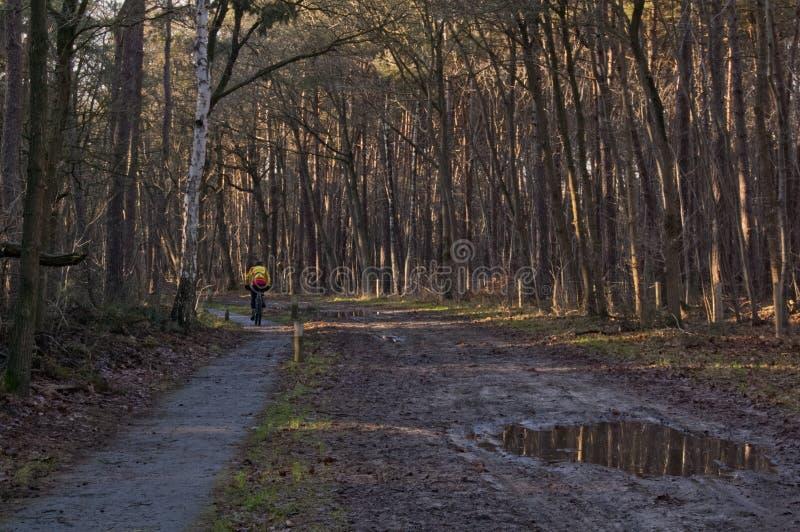 Mens het cirkelen in het bos stock afbeeldingen