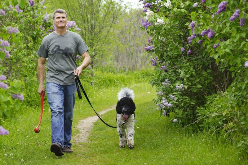 Mens het lopen hond in platteland stock fotografie
