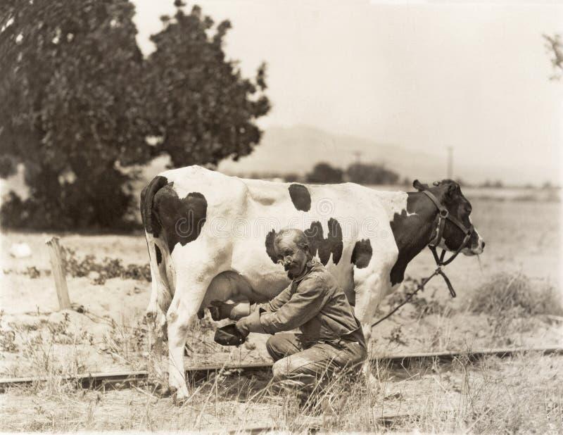 Mens het melken koe op gebied royalty-vrije stock foto