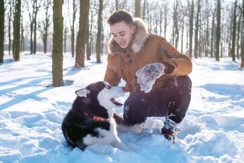 Mens het spelen met Siberische schor hond in sneeuwpark royalty-vrije stock afbeeldingen
