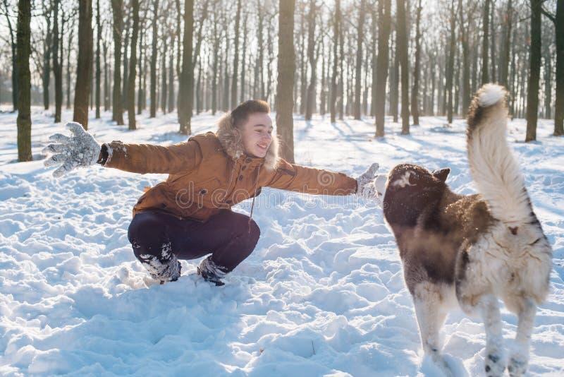 Mens het spelen met Siberische schor hond in sneeuwpark stock foto's