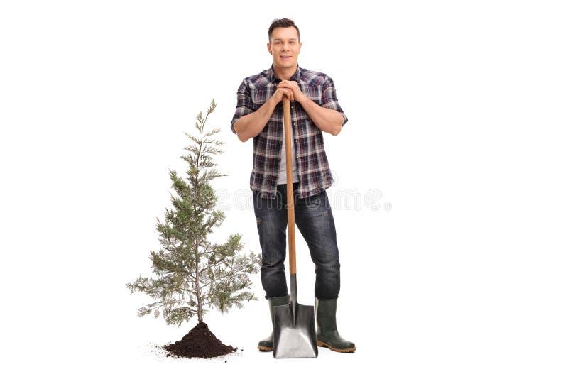 Mens het stellen met een schop naast een geplante boom en een grond stock afbeeldingen