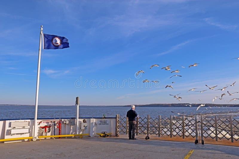 Mens het voeden zeemeeuwen van een Veerboot jamestown-Schotland stock afbeelding