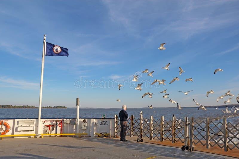 Mens het voeden zeemeeuwen van een Veerboot jamestown-Schotland royalty-vrije stock afbeeldingen