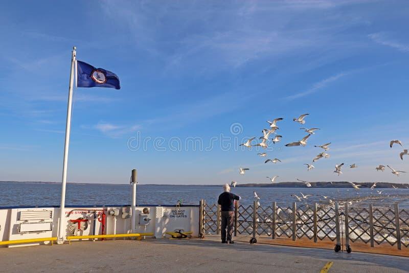 Mens het voeden zeemeeuwen van een Veerboot jamestown-Schotland stock afbeeldingen