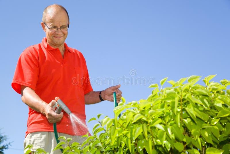 Mens het water geven installaties op middelbare leeftijd stock fotografie