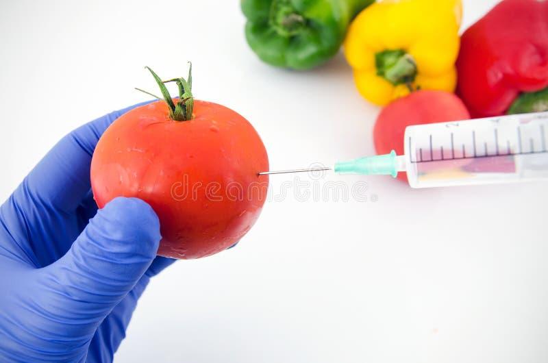 Mens met handschoenen die met tomaat in genetisch laboratorium werken stock afbeeldingen