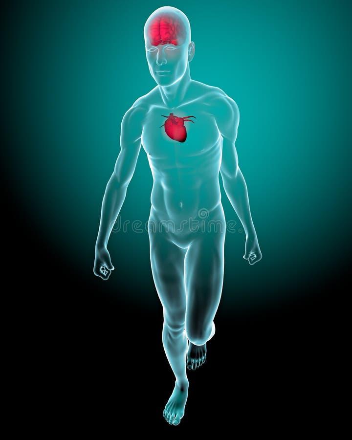 Mens met hersenen en haard op röntgenstraal wordt gezien die royalty-vrije illustratie