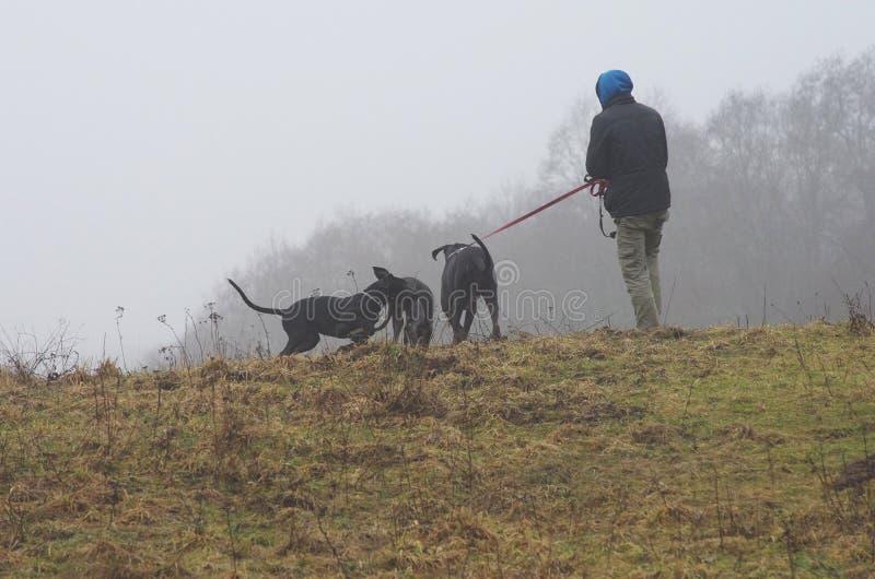 Mens met honden stock fotografie