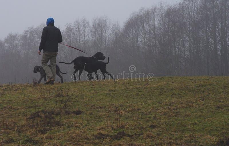 Mens met honden op een nevelige ochtend stock foto