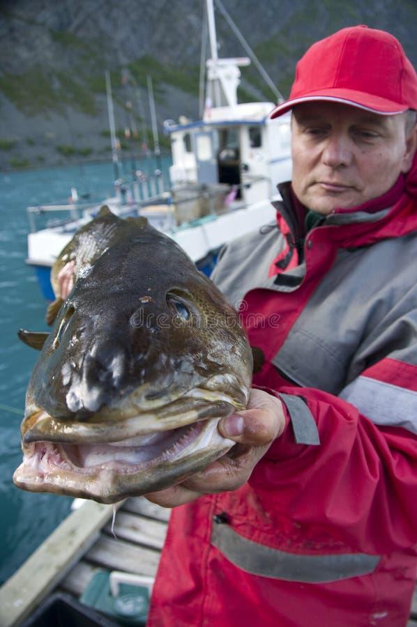 Mens met kabeljauwvissen stock foto's