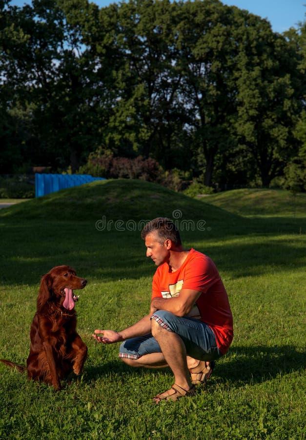 Mens met rode Ierse zetter bij het lopen in het park in de zomer stock fotografie