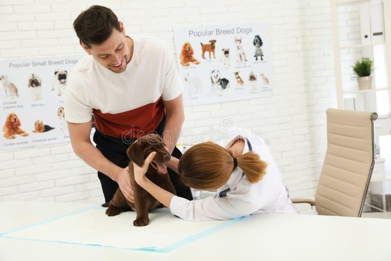 Mens met zijn huisdieren bezoekende dierenarts Doc. die het puppy van Labrador onderzoeken stock afbeeldingen
